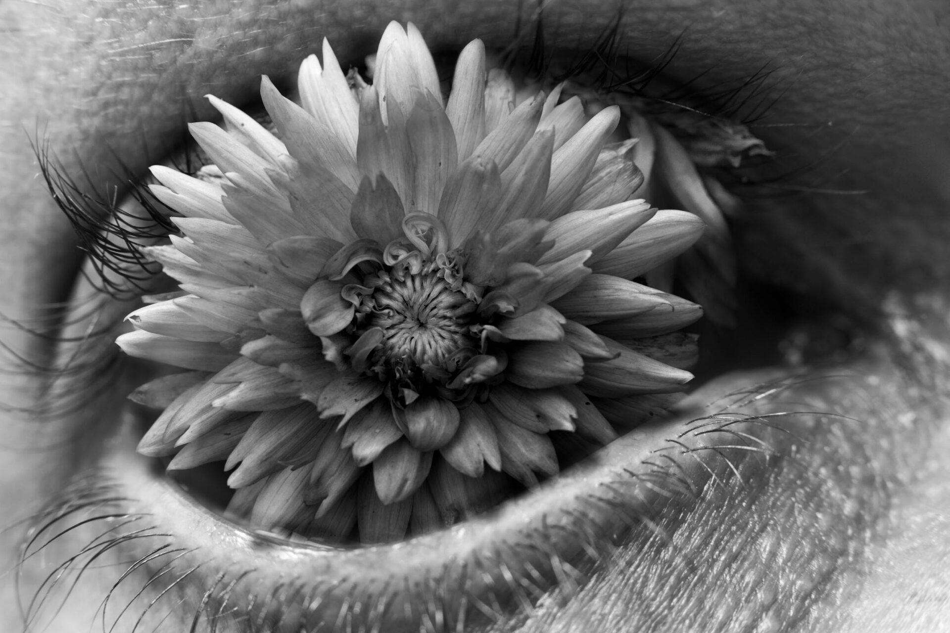 Flow'eye'r IV
