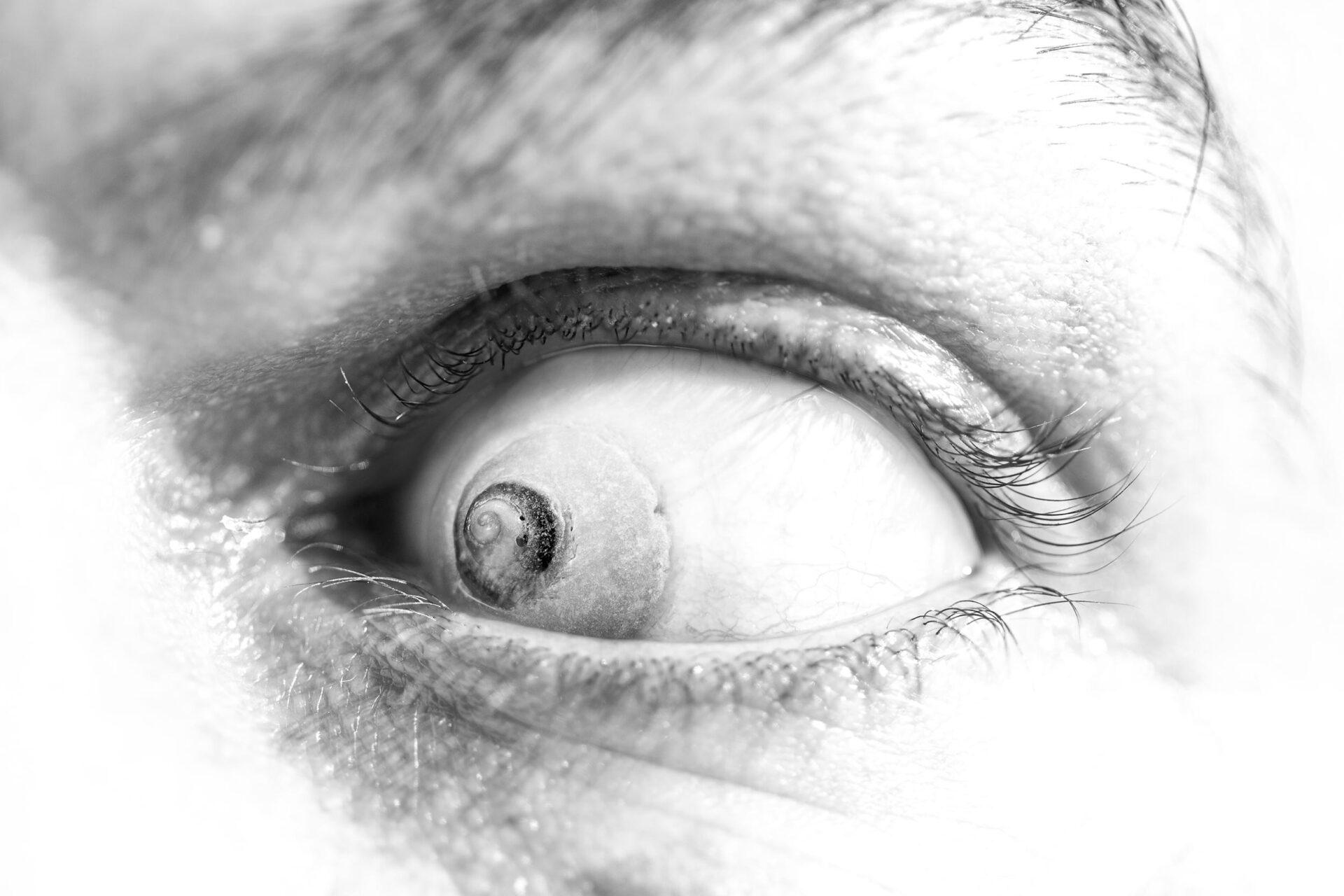 Snail Sh'eye'll II