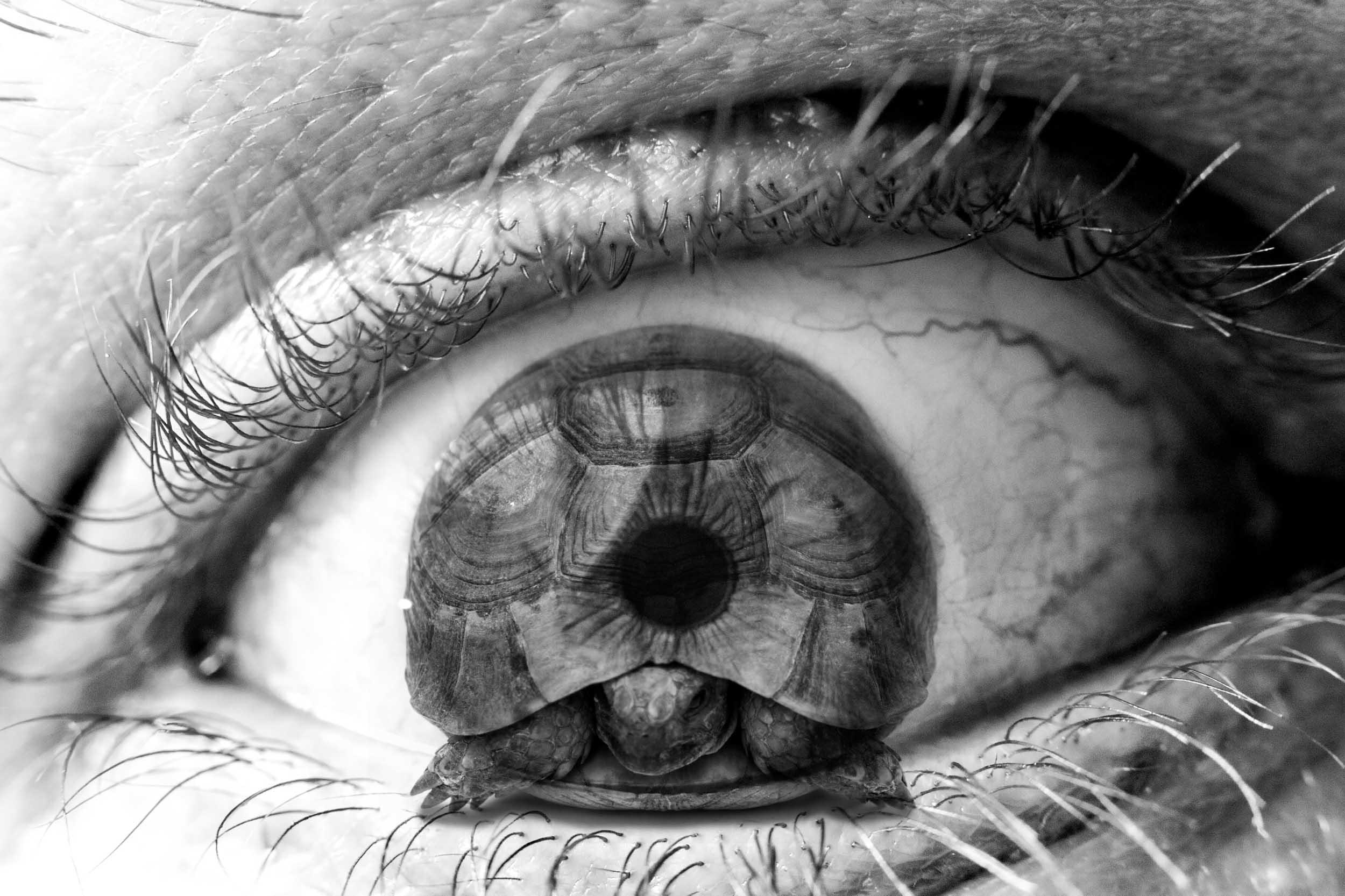 Tourtl'eye'